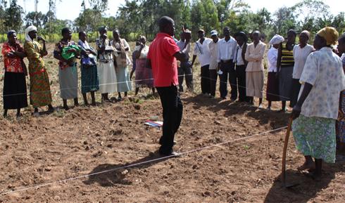 Planting maize seeds.