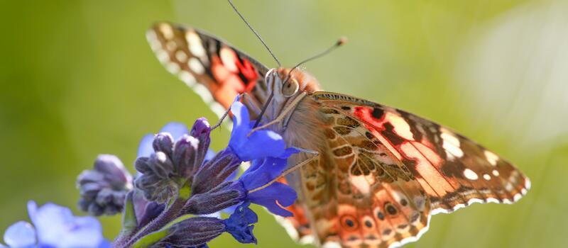 photograph of pollinator